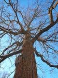 Winter oak Stock Photos