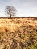 Winter oak on grassland Royalty Free Stock Photography