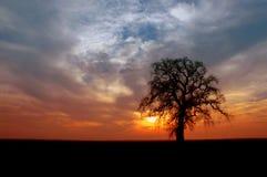 Winter Oak Tree. Silhouette of Winter Oak Tree, Setting Sun, Storm Front Sky royalty free stock photo