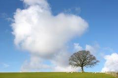 Winter Oak Tree Landscape Stock Image