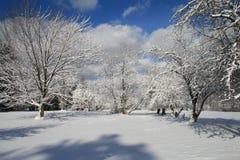 Winter-Obstgarten Stockfotografie