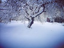 Winter in the old garden. With lots of snow stock photography