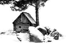 Winter of the old rural house. Old destroyed house under a pine in a winter icy cold Royalty Free Stock Photography