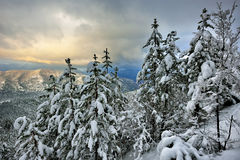 Winter On The Mountain Stock Photography