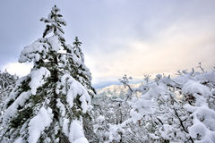 Winter On The Mountain Royalty Free Stock Photography