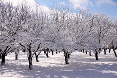 Winter Orchard Royalty Free Stock Photos