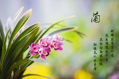 Winter Orchid in China stock photography