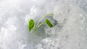 Winter  outcome Stock Photos