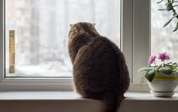 Winter outside the window. The cat is sitting on the windowsill in winter weather royalty free stock images