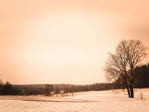 Winter over Kashubian meadows, Polish nature. Winter season concept, copy space on cloudy sky. Abstract filter toned stock photo