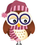 Winter Owl Stock Photo