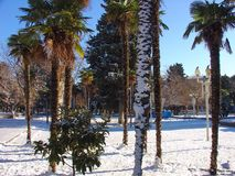 Winter, palm trees in snow Stock Photos
