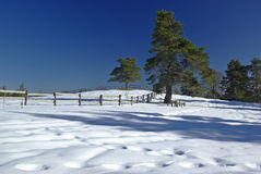 Free Winter Panorama Stock Photography - 12829422