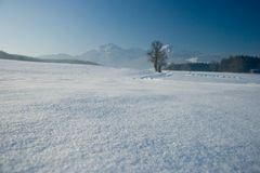 Winter panorama. Panorama of the alps suitable as backdrop for products Royalty Free Stock Image