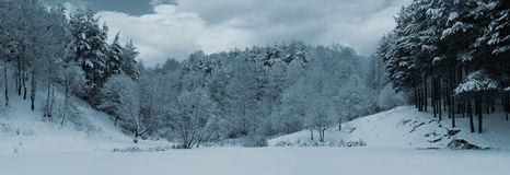 Winter panorama. Panorama tone-mapped winter landscape with pines and cloudy sky Stock Image