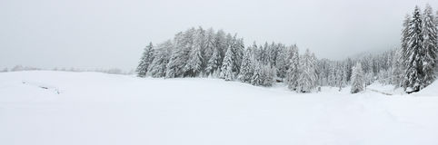 Winter panorama. With snowy forest trees Royalty Free Stock Images