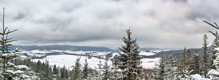 Winter panorama in the forest Royalty Free Stock Photo