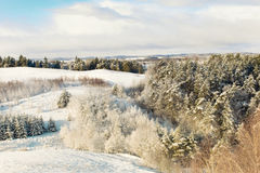 Winter panorama. Frozen trees, bushes and meadows Stock Image