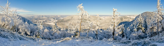Winter panorama Stock Images