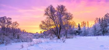Winter panorama landscape with forest, trees covered snow and su. Nrise. winterly morning of a new day. purple winter landscape with sunset, panoramic view Royalty Free Stock Images
