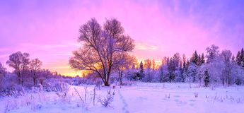 Winter panorama landscape with forest, trees covered snow and su. Nrise. winterly morning of a new day. purple winter landscape with sunset, panoramic view Stock Images