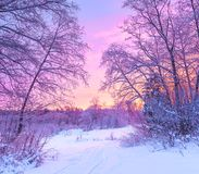 Winter panorama landscape with forest, trees covered snow and su. Nrise. winterly morning of a new day. purple winter landscape with sunset, panoramic view Stock Photos