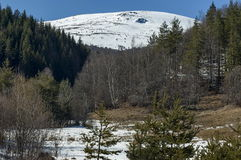 Winter panorama landscape with pine and deciduous forest Royalty Free Stock Image