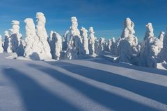 Free Winter Panorama Landscape With Forest, Trees Covered Snow And Sunrise. Winter Morning Of A New Day. Christmas Time. Royalty Free Stock Photography - 141362397