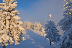 Winter panorama on mountain Stock Photography