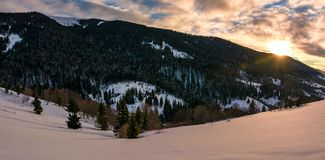 Winter panorama in mountains at sunrise. Forested hills of mountain ridge and some trees on snowy slopes royalty free stock images