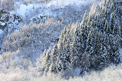 Winter panorama with snow clad forests Stock Photos
