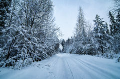Winter panorama snow-covered forest, Russia, the Urals Royalty Free Stock Photo