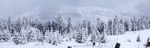 Winter panorama with snow covered hill Royalty Free Stock Photo