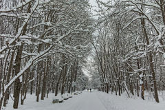 Winter Panorama with snow covered trees in South Park in city of Sofia Stock Photo