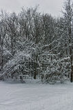 Winter Panorama with snow covered trees in South Park in city of Sofia Royalty Free Stock Photo