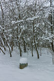 Winter Panorama with snow covered trees in South Park in city of Sofia Stock Images