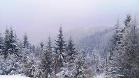 Winter panorama. royalty free stock image