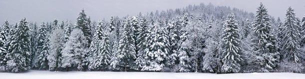 Winter panorama XXL Royalty Free Stock Photos