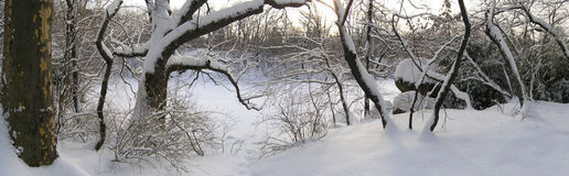 Winter Panoramic Stock Images