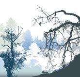 Winter panoramic landscape with bare and snowy trees and plants. White, blue,gray and black silhouettes of trees Stock Photography