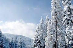 Winter paradise Royalty Free Stock Photo