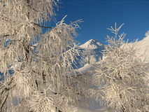 The winter paradise in Slovenia Royalty Free Stock Photography