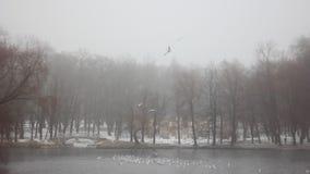 Winter Park Γκάτσινα απόθεμα βίντεο