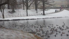 Winter Park Γκάτσινα φιλμ μικρού μήκους