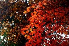Winter Park Ναντζίνγκ Gulin Στοκ φωτογραφία με δικαίωμα ελεύθερης χρήσης
