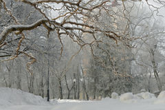 Winter Park νωρίς το πρωί Στοκ Φωτογραφία