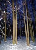Winter Park στη Μόσχα τη νύχτα Στοκ εικόνα με δικαίωμα ελεύθερης χρήσης