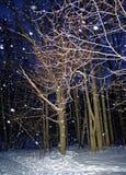 Winter Park στη Μόσχα τη νύχτα Στοκ Φωτογραφίες