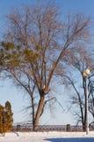 Winter Park στο ανάχωμα Στοκ φωτογραφία με δικαίωμα ελεύθερης χρήσης