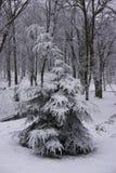 Winter in Park 5 Lizenzfreie Stockbilder
